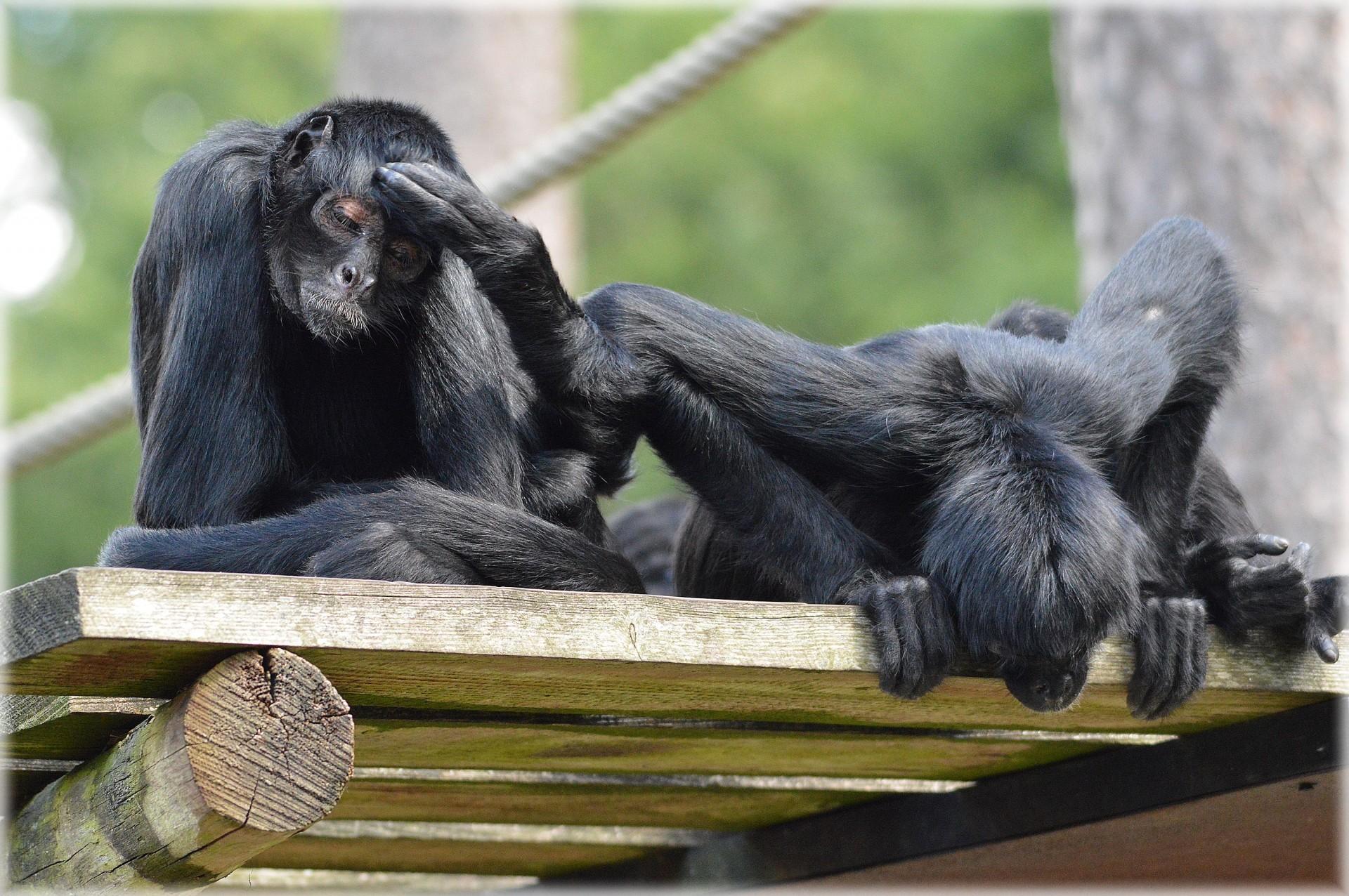 Afbeeldingsresultaat voor the monkeypath